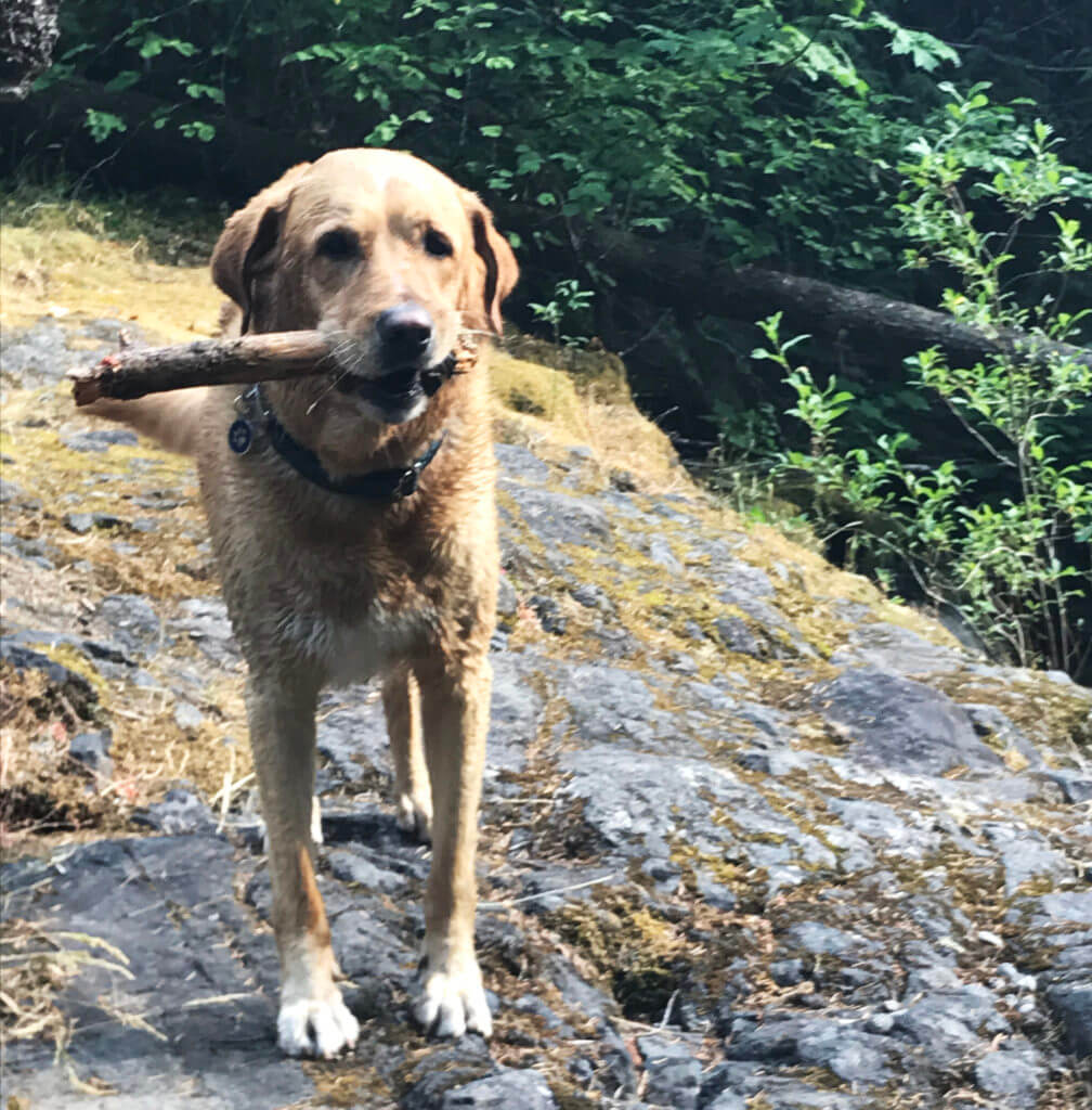 Riley the Wonderdog